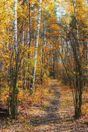 Landscape with the autumn park footpath