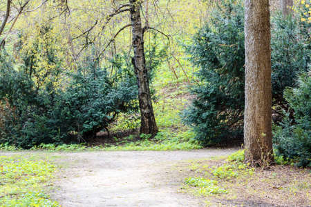 ramble: Spring landscape with trees and footpath in the park Stock Photo