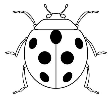 Illustration of the contour ladybug icon