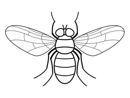 Illustration of the contour fly insect Çizim