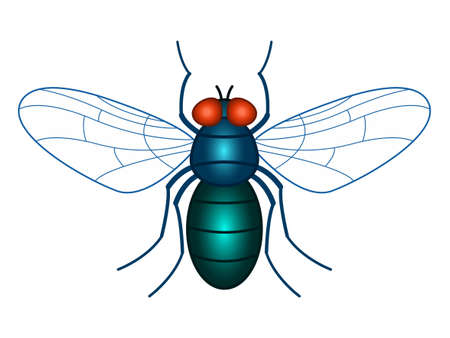 Illustration of the fly insect Çizim