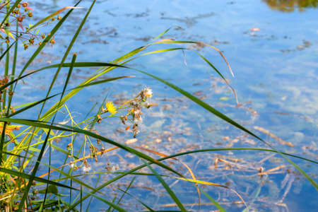 Wild flowers on the water surface background