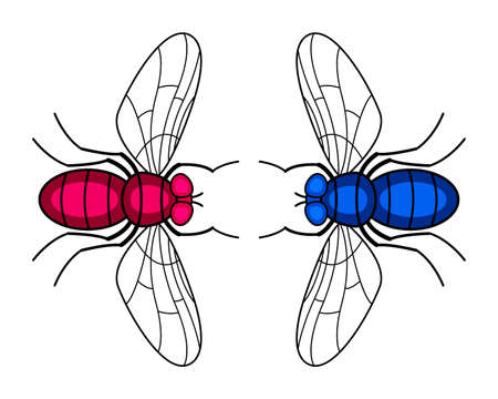 Illustration of the two fly insects Ilustracja