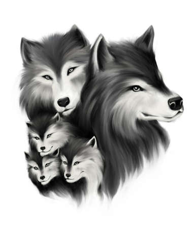 on white: Portrait of wolf family. Hand drawn illustration