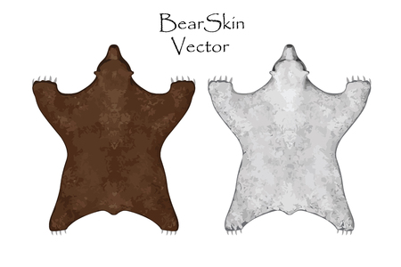 zoo dry: Bear pelt. Big brown and White Bear. Hunting trophy. Vector illustration Top View 1 Illustration
