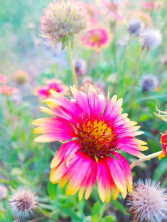 Colors full Natural flower  with blooming stock Photo