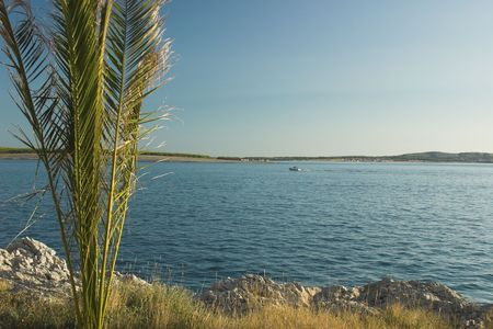 palm on the beach photo