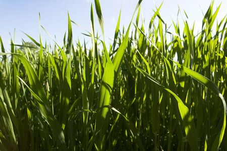 cropcircle: field