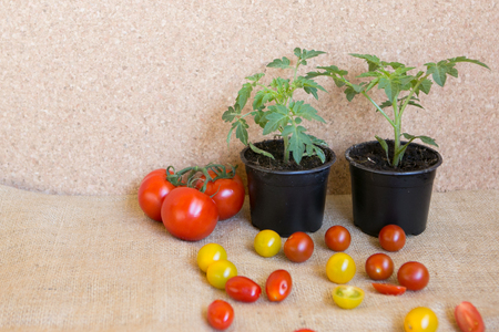 tomato: before and after Stock Photo