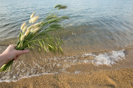 bouquet of summer grass on the beach