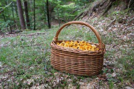 A very good day in the forest full with mushrooms