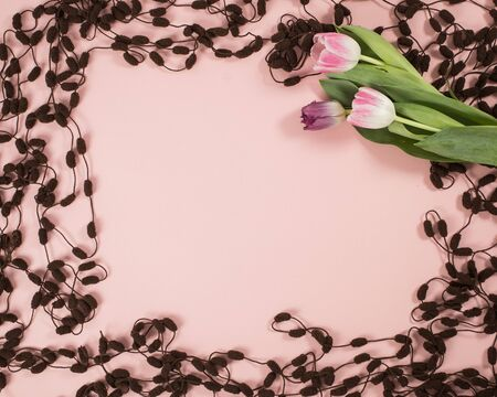 Spring background with tulips , frame on the pink background