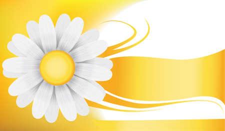 camomile: camomile background