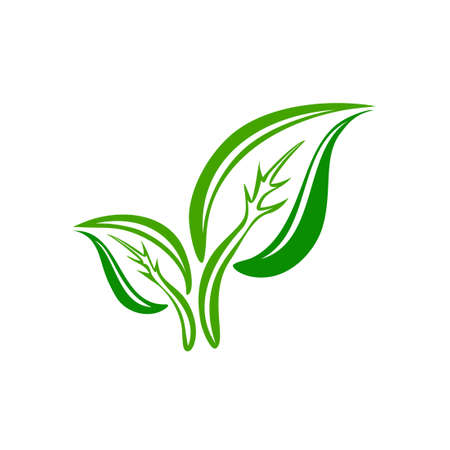 leaf shape: green leaf symbol illustration icon