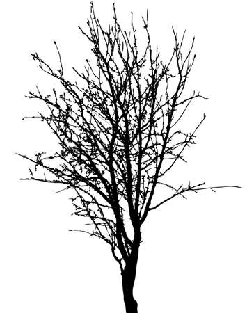 Black tree silhouette