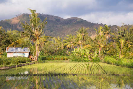 rural area: Rural area of Bali, Indonesia during sunset