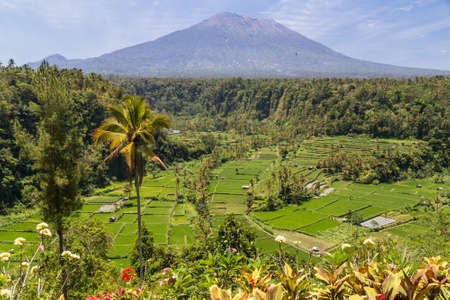 human palm: Rice terraces with Mount Agung in background, Bali, Indonesia