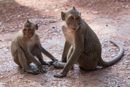 prasat bayon: Wild monkeys around Prasat Bayon temple in Angkor Thom complex
