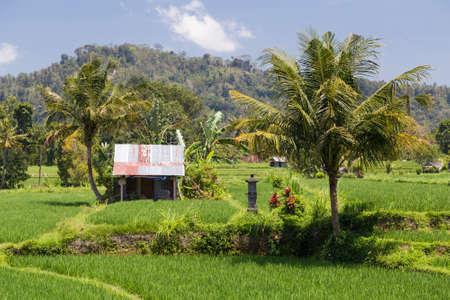 rural area: Rural area in Bali, Indonesia Stock Photo