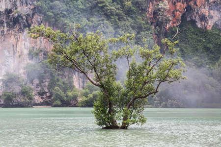 Lone tree grows at Railay Beach in Krabi, Thailand 版權商用圖片