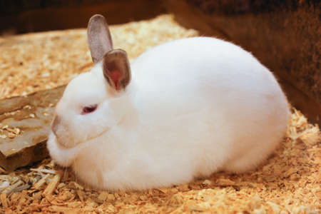 stitting: Cute rabbit with white fur is stitting