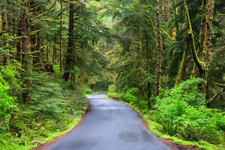 temperate: Road running in temperate rainforest of Oregon coast, USA