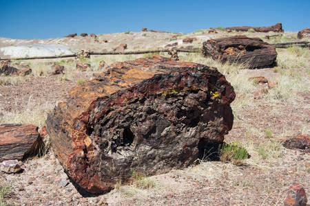 petrified: Petrified trunk in Petrified Forest National Park, Arizona, USA