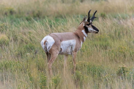 baby deer: Baby Deer at Yellowstone National Park, USA