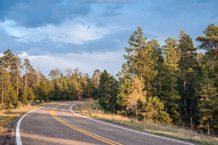 Highway in the forest of central Wyoming 版權商用圖片