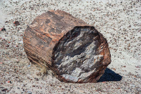 Petrified trunk in Petrified Forest National Park, Arizona, USA