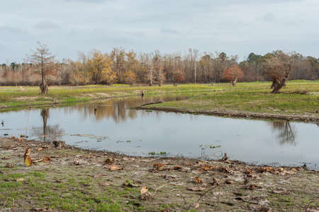 bayou swamp: Swamps and lakes of central Texas during Fall Stock Photo