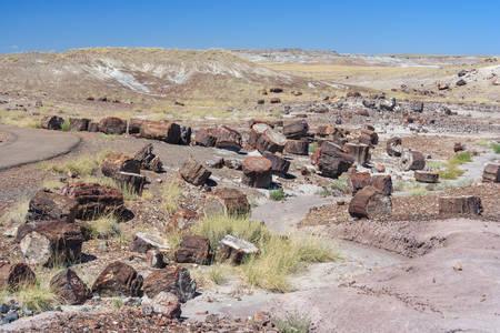 化石幹や木化石森林の国立公園、アリゾナ州、アメリカ合衆国