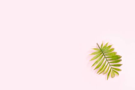 Palm leaves in a corner of pink background. Flat layout