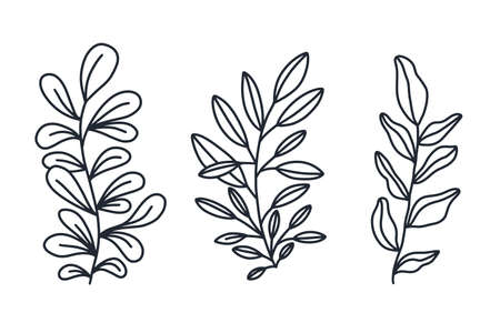 Plant branches with leaves ink in black isolated on white background. Hand drawn doodle style vector illustration.