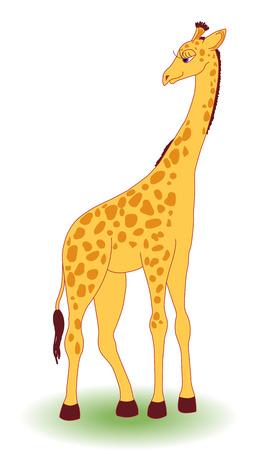 Giraffa su bianco. Isolato.