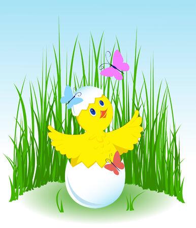 Chicken is born on a green grass. Butterflies fly.  Vector
