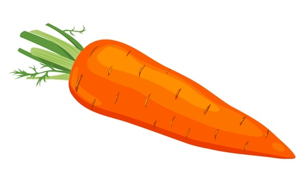 carrots isolated: The carrot. Illustration