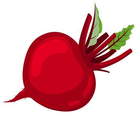 beetroot: Remolacha roja. Vectores