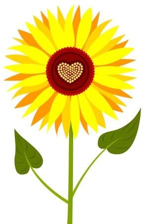 sunflower isolated: Girasole isolato.