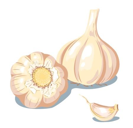 Composizione di aglio. Isolato su bianco. Illustrazione vettoriale.