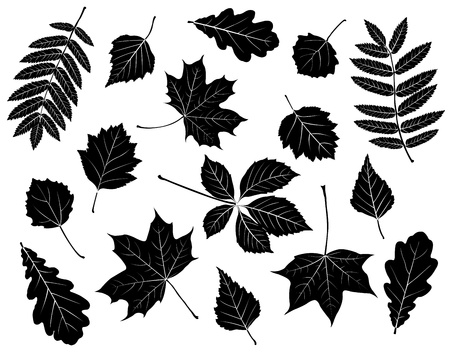 Set of silhouettes of leaves. Maple, oak, mountain ash, birch, aspen, wild grapes, poplar and hawthorn. Isolated on white. Vector