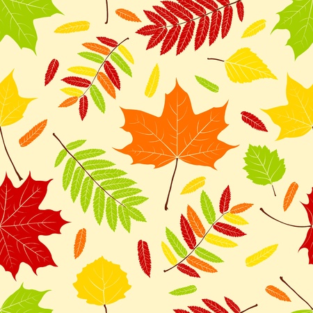 sycamore leaf: Autumn color leaves. Seamless pattern. Vector background Illustration
