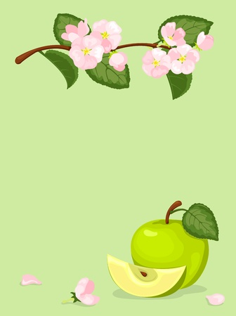 agriculture wallpaper: Green apple and blossoming branch. On a green background. Vector illustration. Illustration