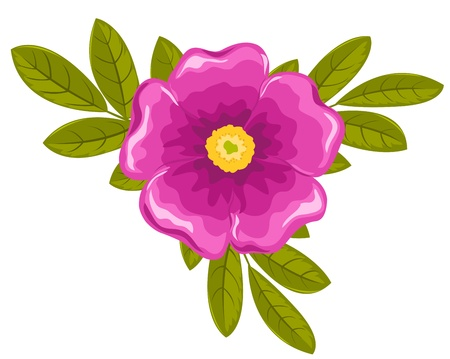 Dogrose flower and leaves. Vector illustration. Isolated on white. Stock Vector - 10799021