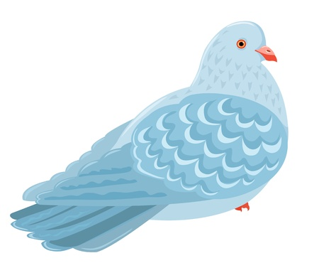 Sitting pigeon  Isolated on white  Cartoon illustration