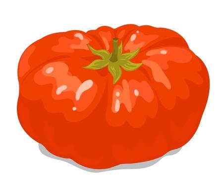 Big tomato 1 Stock Vector - 16163350