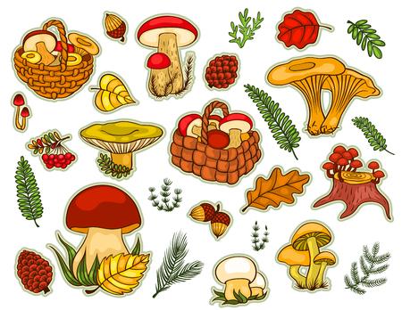 chanterelle: Mushrooms set isolated on white. Vector cartoon illustration.