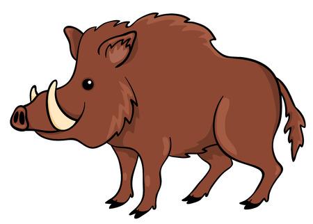 wildschwein: Boar isoliert auf weiß.