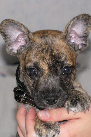 puppy Stock Photo - 5763743