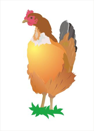 roost: illustration of a chicken on a white background